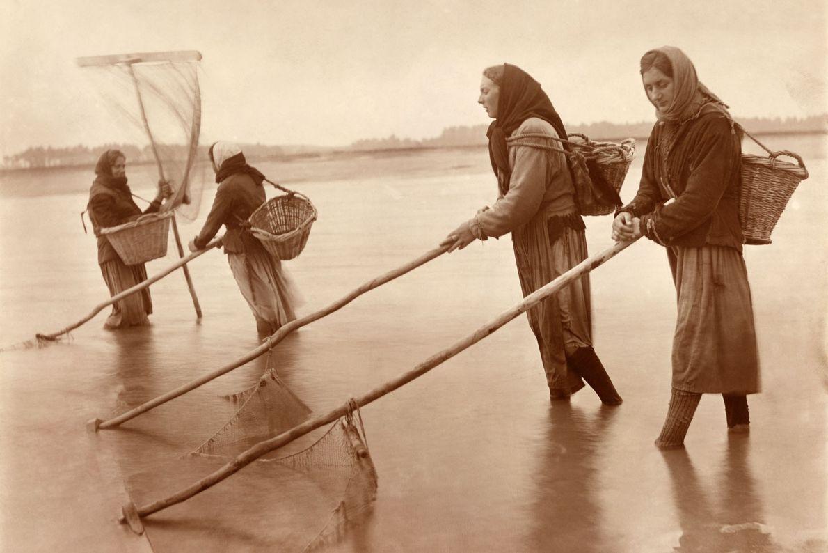 Las mujeres empujan sus redes durante la marea baja para recolectar camarones en Normandía, Francia, en ...