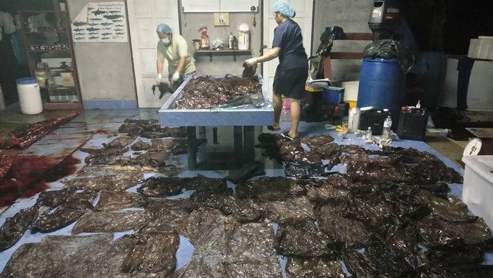 Más 7 kilogramos de residuos plásticos provocan la muerte de un calderón
