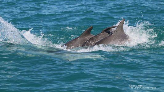 """Mira a estos delfines nariz de botella """"dándose la mano"""""""