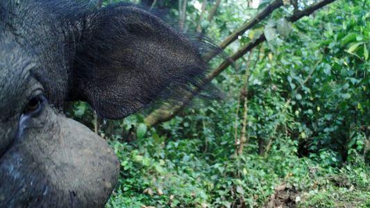 El misterioso cerdo gigante captado en video