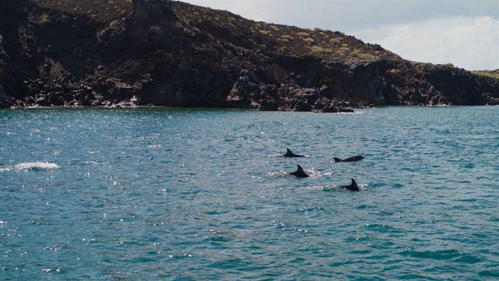 El delfín nariz de botella, el animal más característico de Baja California | Sobrevolando