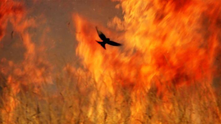Un territorio comparable a la mitad de los Estados Unidos arde anualmente en África