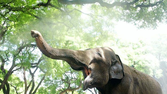 El recorrido de Mara, desde el Ecoparque hasta a un santuario en Brasil