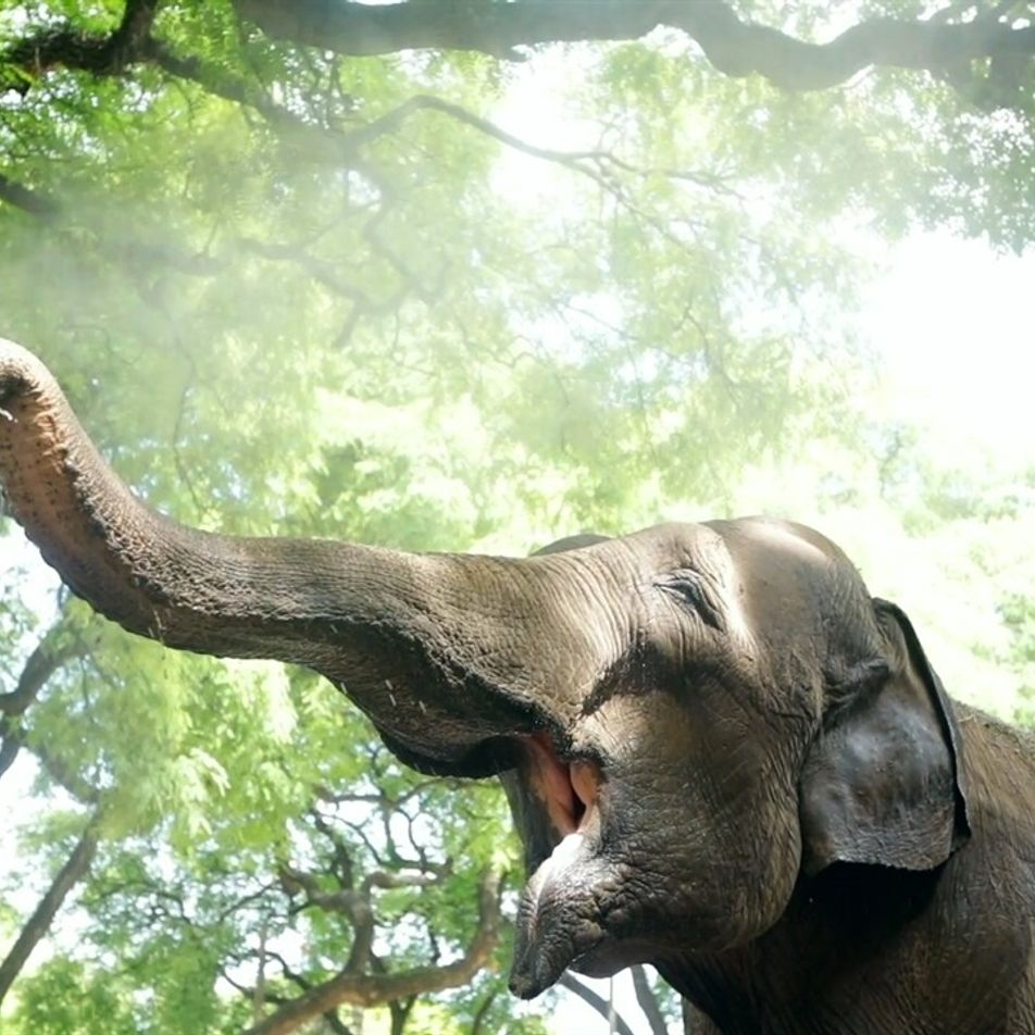 El recorrido de la elefanta Mara, desde el Ecoparque hasta un santuario en Brasil