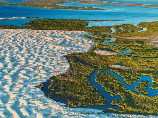 Humedales: La pérdida de los manglares avanza a un nivel alarmante