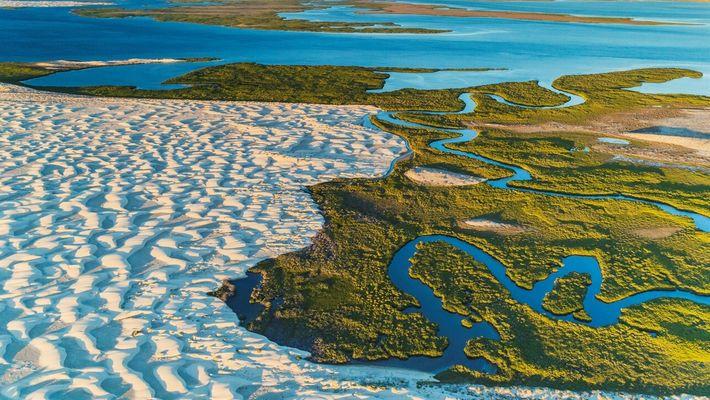La perdida de los manglares avanza a un nivel alarmante