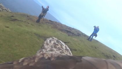 Observa cómo sería volar en el lomo de un águila