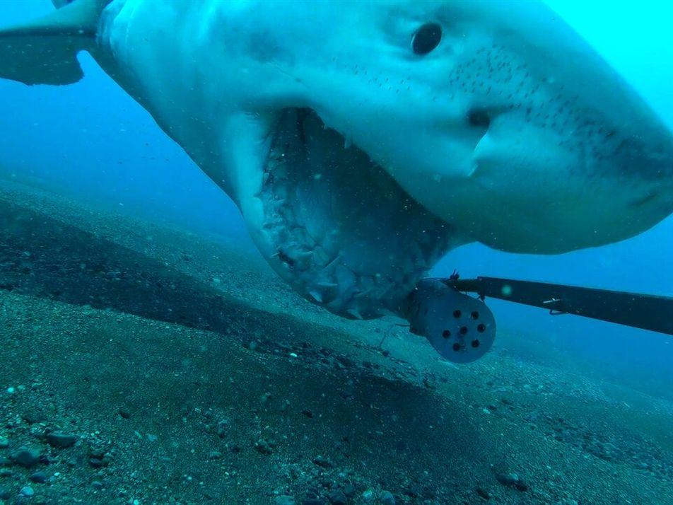 Un gran tiburón blanco roba una cámara y emprende un salvaje paseo