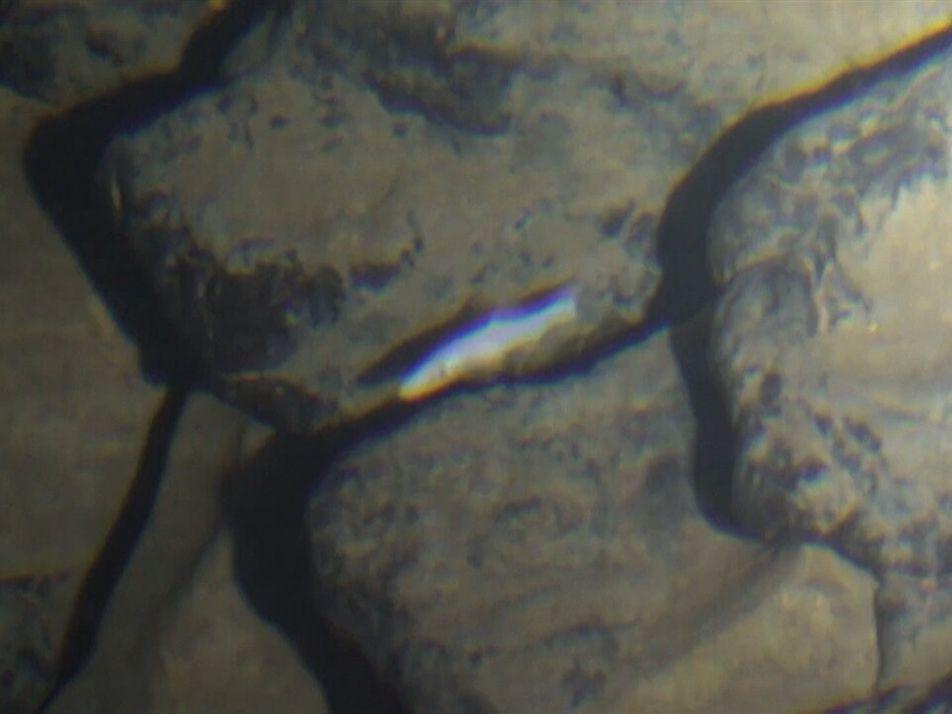 Hallan un pez ciego que habita en una cueva única