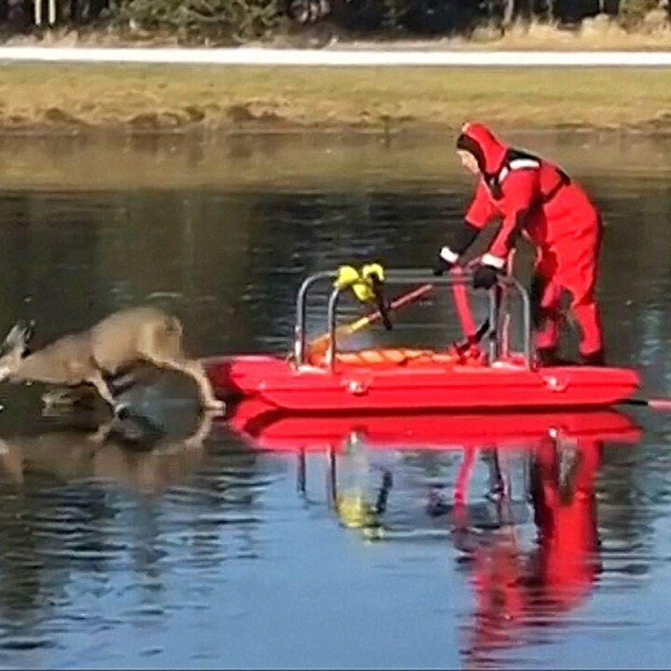 Bombero salva a ciervo atrapado en hielo resbaladizo