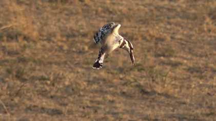 Safari Live: Esta ave se alimenta de escorpiones y arañas