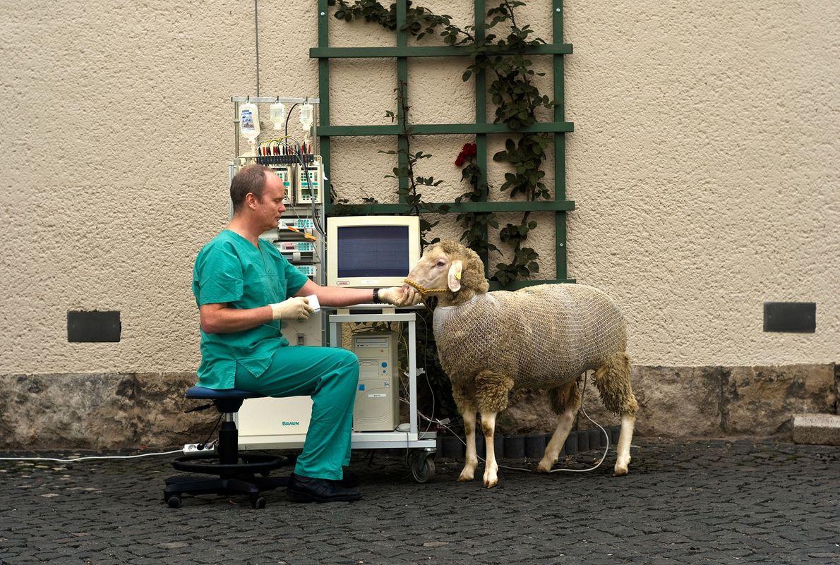 Conteo de ovejas