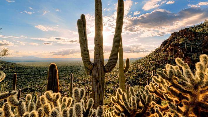 Desiertos 101: ¿Cuántos tipos hay y cuáles son los más calurosos?