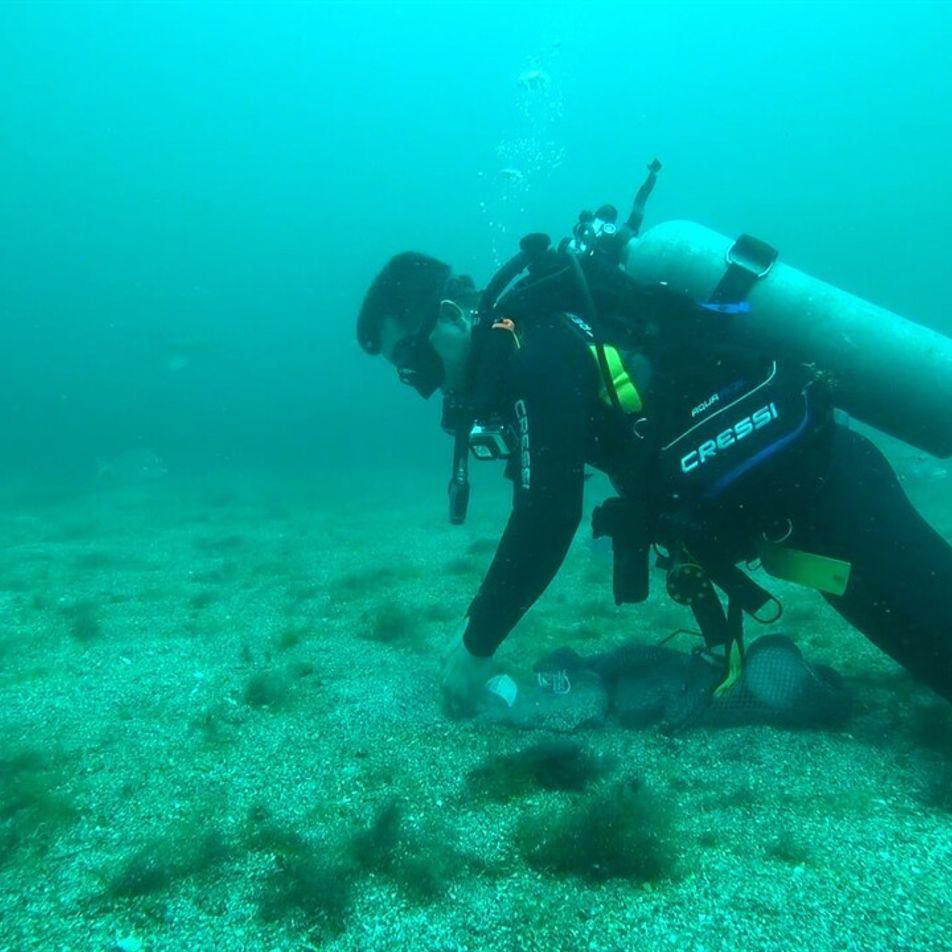 Nuevas técnicas de ADN ambiental ayudan a develar misterios del océano