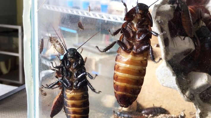 Si le tienes miedo a los insectos, no mires esto