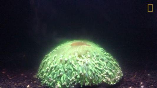 Mira el aterrador video de un coral convulsionando mientras el mar se calienta