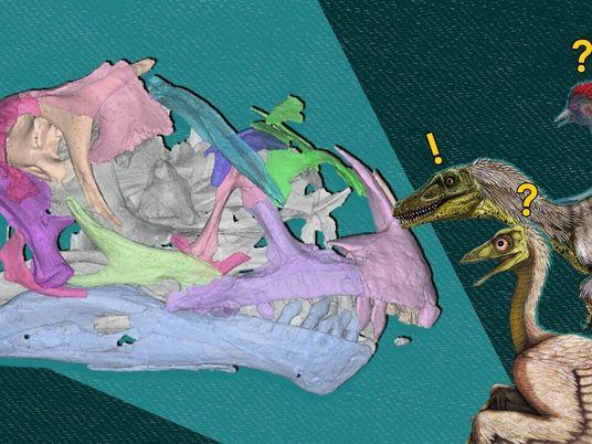 ¿Por qué ahora es la edad de oro de la paleontología?