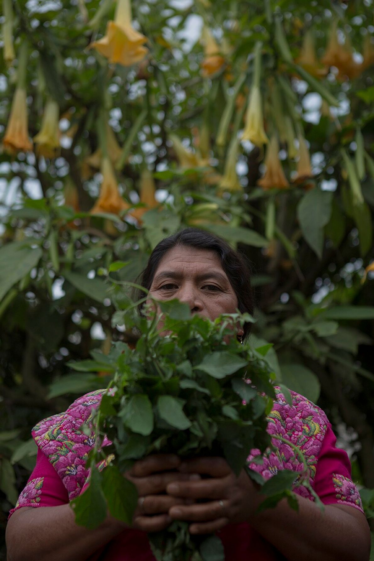 Retrato de Doña Pancha Telón Quex, una mujer indígena que cosecha en su huerta orgánica y ...