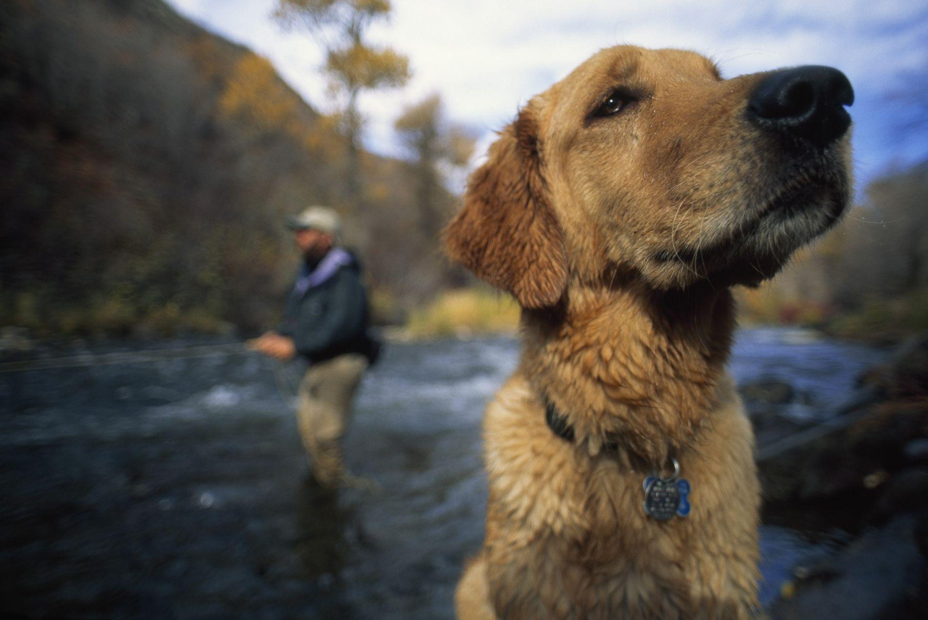 Un pescador de mosca y su Golden Retriever disfrutan del río Provo, en Utah. La investigación emergente sugiere que los perros son más parecidos a los humanos de lo que nunca imaginamos.