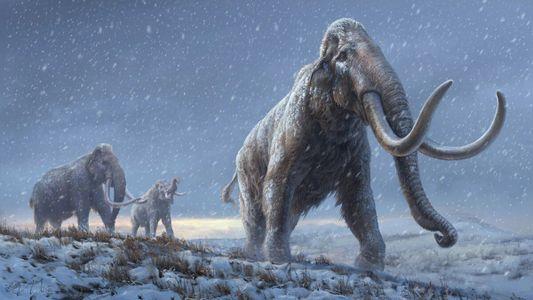 Logran secuenciar el ADN más antiguo del mundo a partir de dientes de mamut de un ...