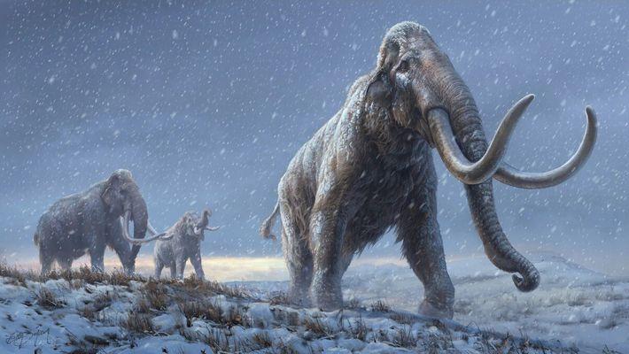 Hace un millón de años, los mamuts de la estepa siberiana transmitieron muchas de las adaptaciones ...