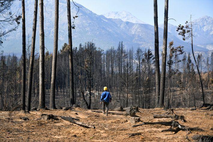 incendios-patagonia-cerro-radal-mateo