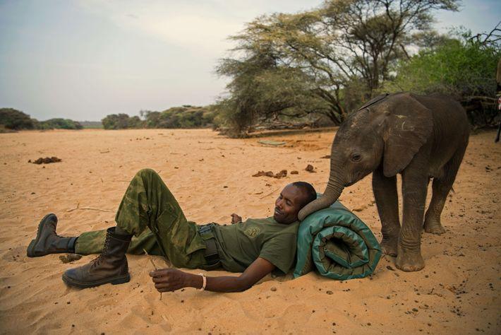 Un cuidador de animales y un elefante huérfano rescatado comparten un momento en el Santuario de ...
