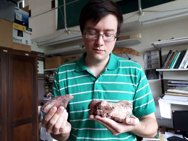 Matías Motta sostiene restos del pie de la nueva especie de dinosaurio carcharadontosauridae.