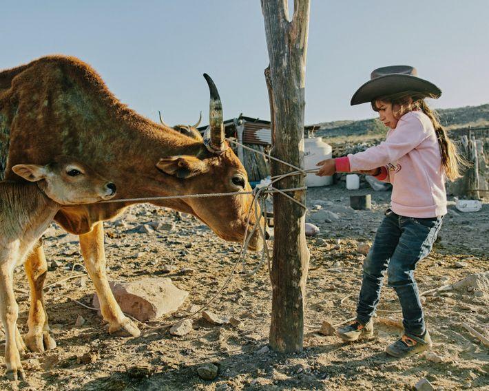 Guadalupe, la hija de Eleonary Arce Aguilar, se prepara para ordeñar vacas en Rancho Mesa San ...