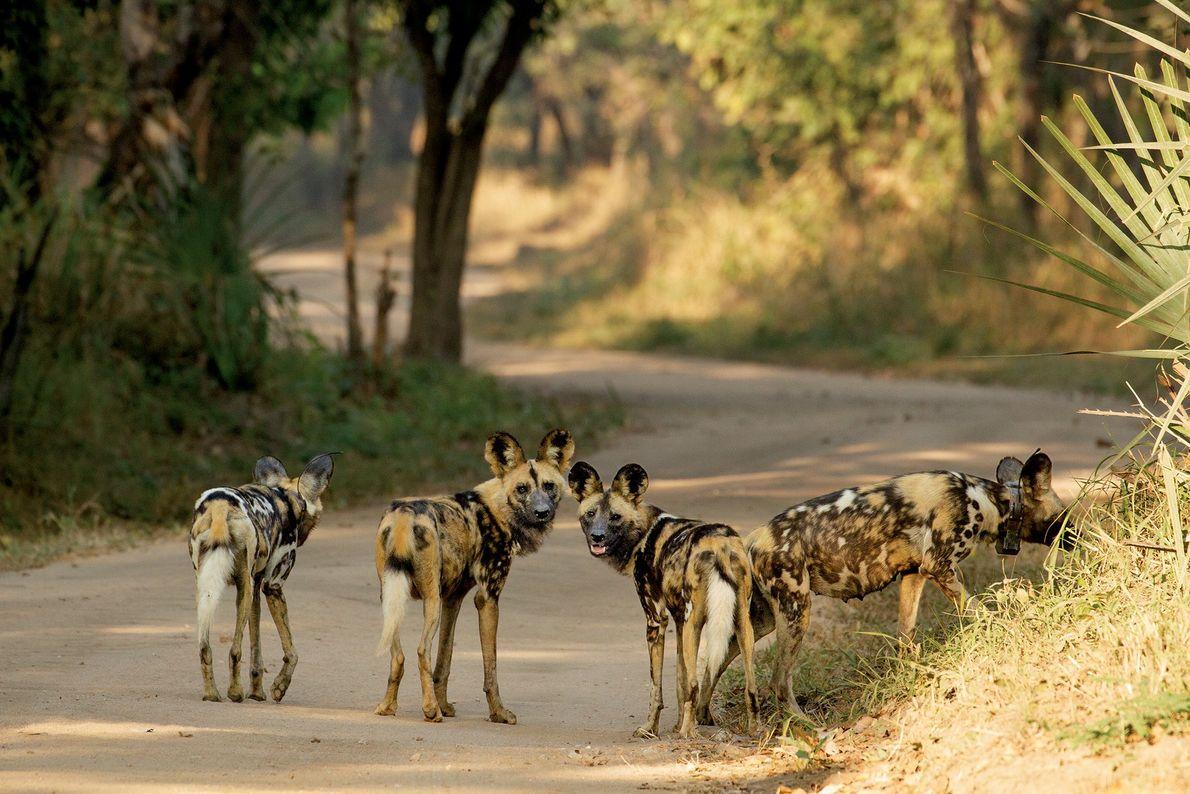 Parque Nacional de Gorongosa, Mozambique