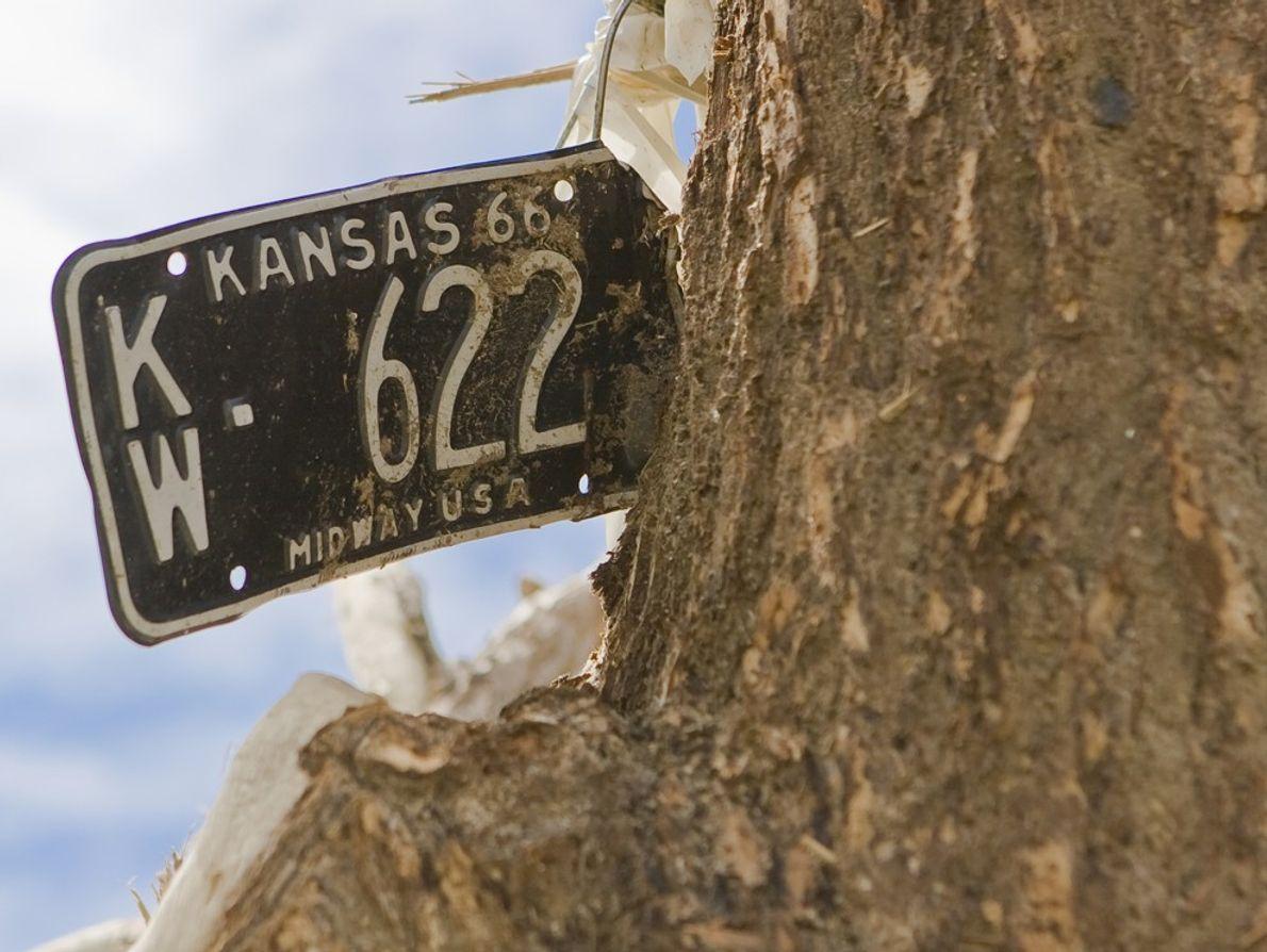 Una patente de un vehículo de Kansas incrustada en un árbol después de que un tornado ...