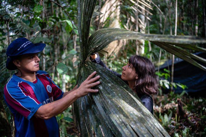 Obed Quiroz (izquierda) y Lina Bolivar (derecha), parte del equipo de botánica, señalaron que estas hojas ...
