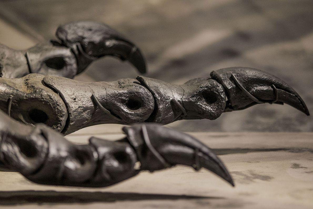 """Esta imagen muestra las patas y las garras de un espécimen casi completo de """"Tyrannosaurus rex"""" ..."""