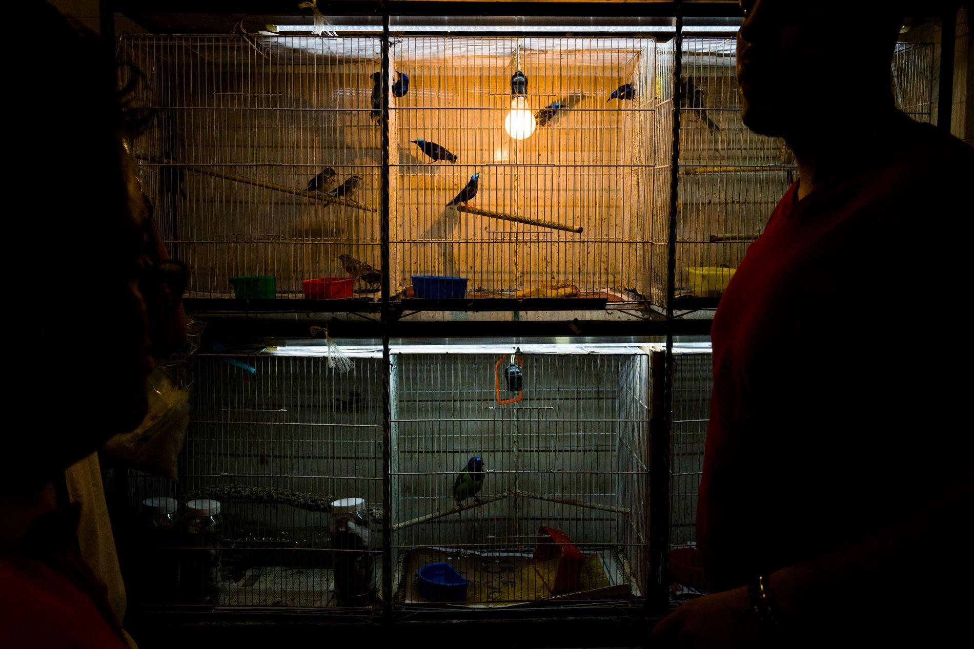 En el Mercado de Sonora de la ciudad de México, un proveedor exhibe mieleros patirrojo, en ...