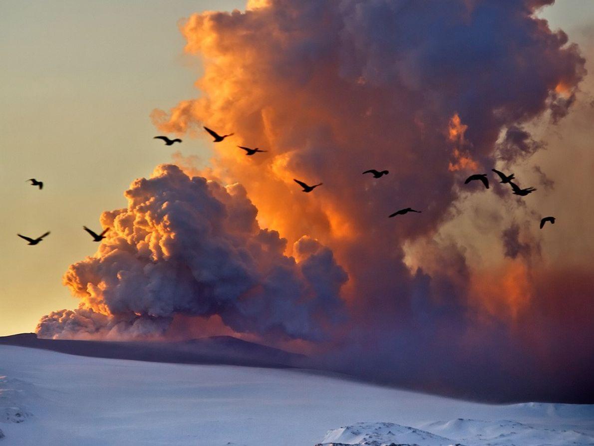 Gansos atraviesan la nube de cenizas de la erupción del volcán Eyjafjallajökull, que comenzó en abril ...