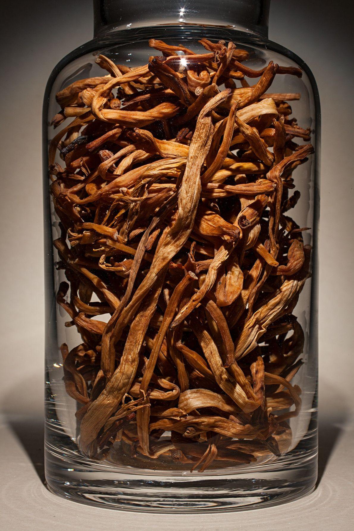 "Nombre común: flor de un día Latín: ""Hemerocallis citrina"" Chino: Huang hua cai Algunos usos: favorece la lactancia, mejora ..."