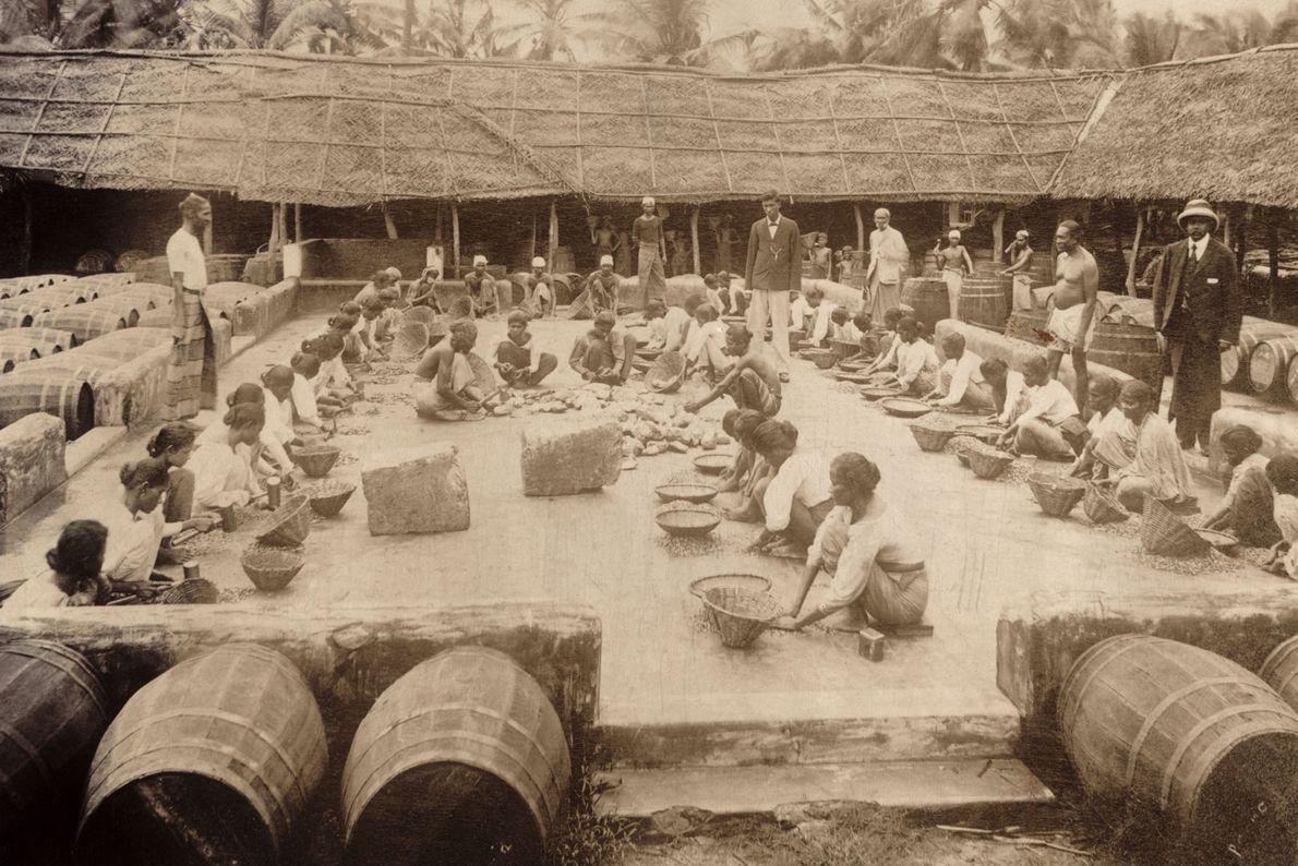 Un gran grupo de trabajadoras tamizaron grafito con herramientas y cestas en Ceilán en 1912.