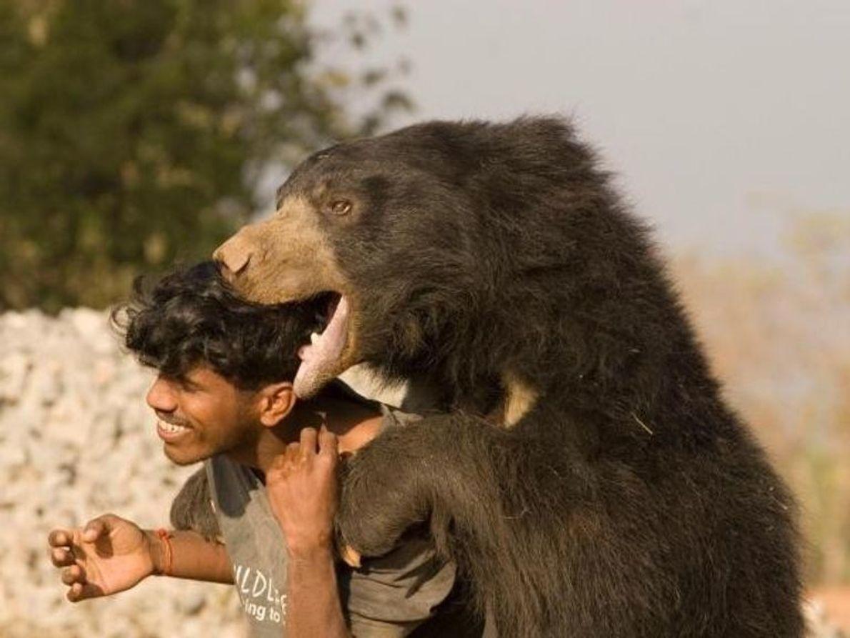 """La verdadera identidad del oso que describió Kipling como """"oso pardo dormilón"""" es un enigma: la ..."""