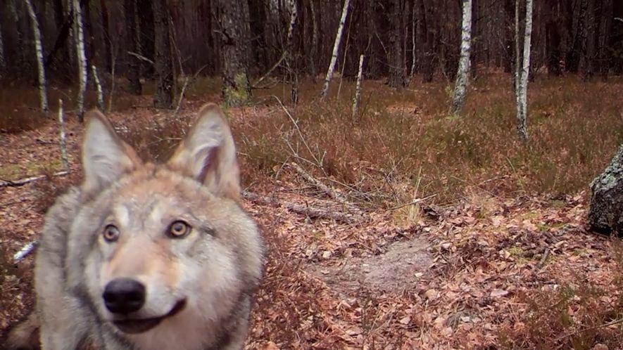 33 años después de Chernóbil, la naturaleza está prosperando