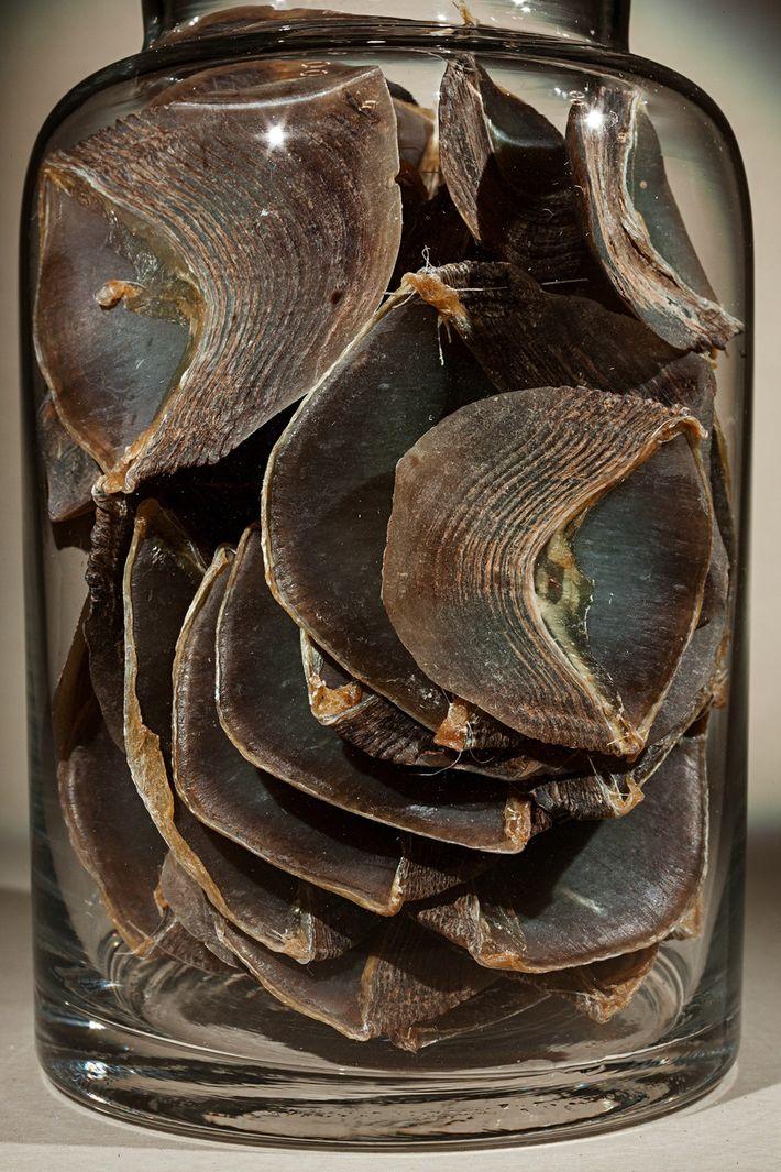 La demanda de escamas de pangolín, utilizado en la medicina tradicional china, ha convertido al animal ...
