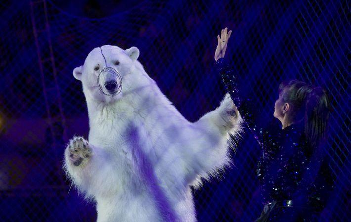 Detrás de la red, un oso polar baila en el Circus on Ice en Kazan, Rusia.