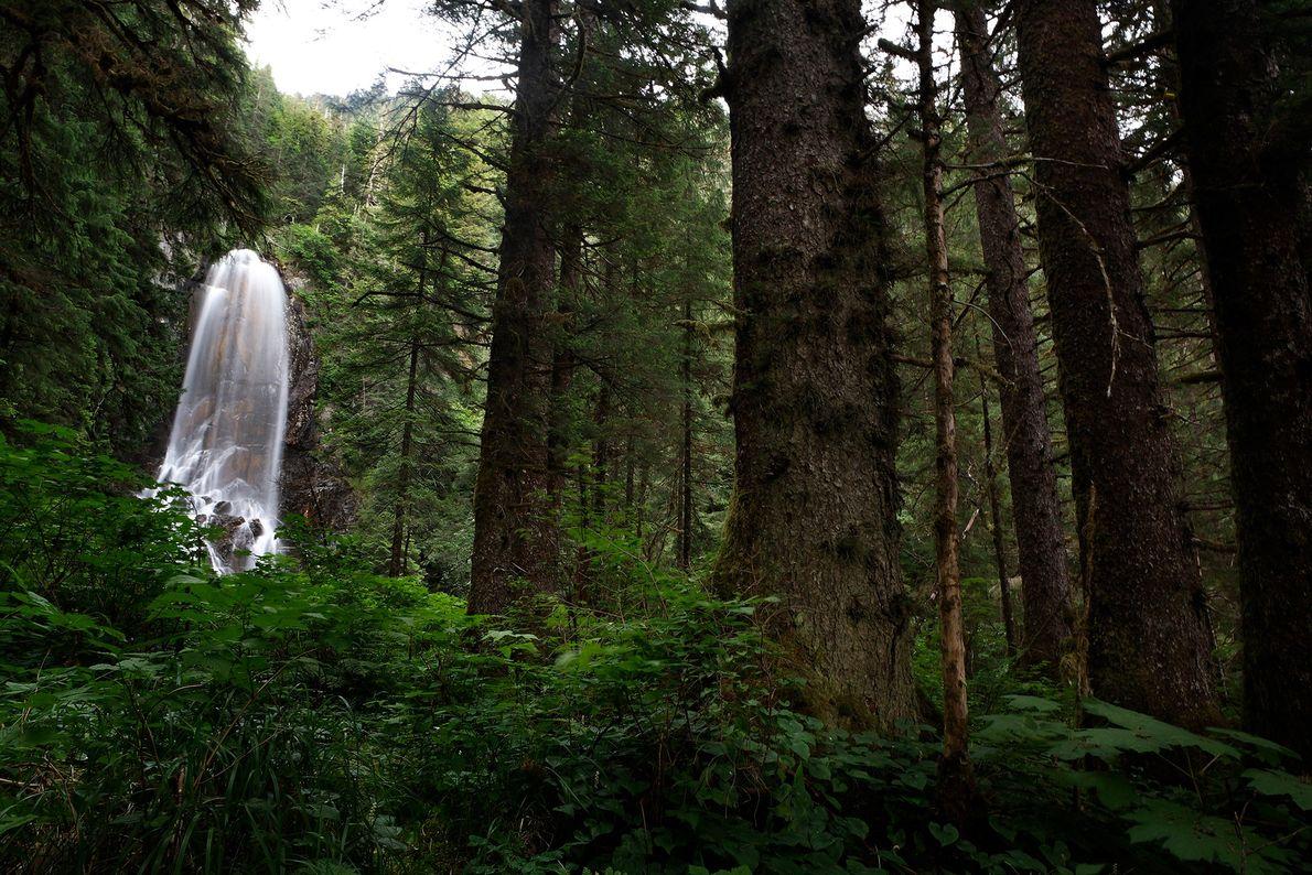 Una cascada en el Bosque Nacional Tongass en Alaska es uno de los parques protegidos por ...