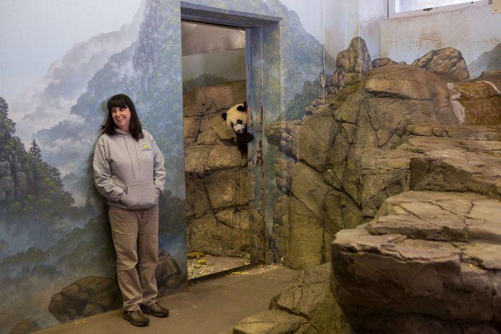 Bei Bei, un panda gigante en el Zoológico Nacional Smithsonian en Washington, DC, mira por la ...