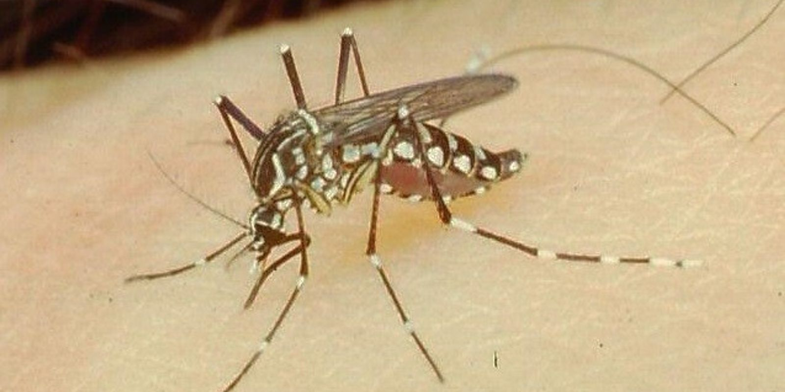 Brote de dengue en Argentina: ¿el Aedes aegypti está ampliando su temporada de incidencia?