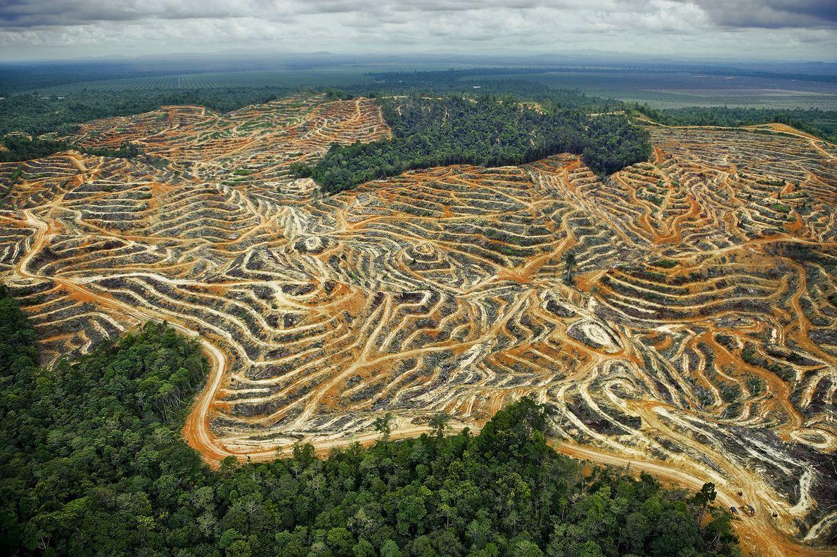 Las rutas de acceso y los campos en terrazas borran las onduladas tierras bajas de Sarawak ...