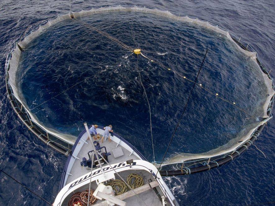 Cómo la sobrepesca afecta la biodiversidad marina