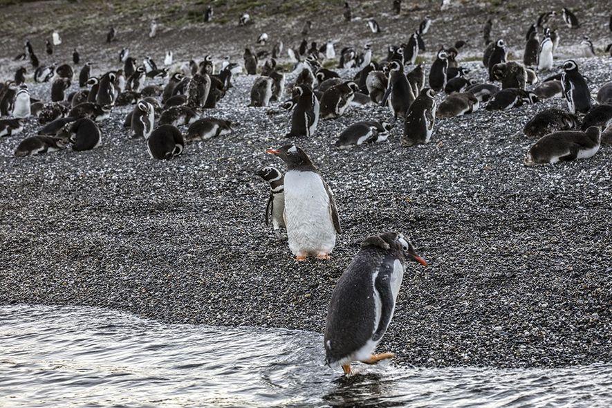 #NGXplorers: Día Mundial del Pingüino