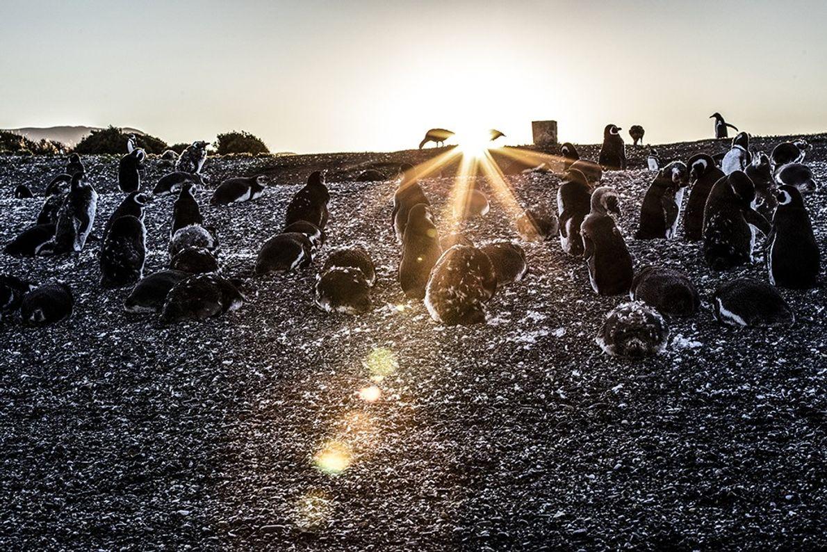 pinguinosrikky4