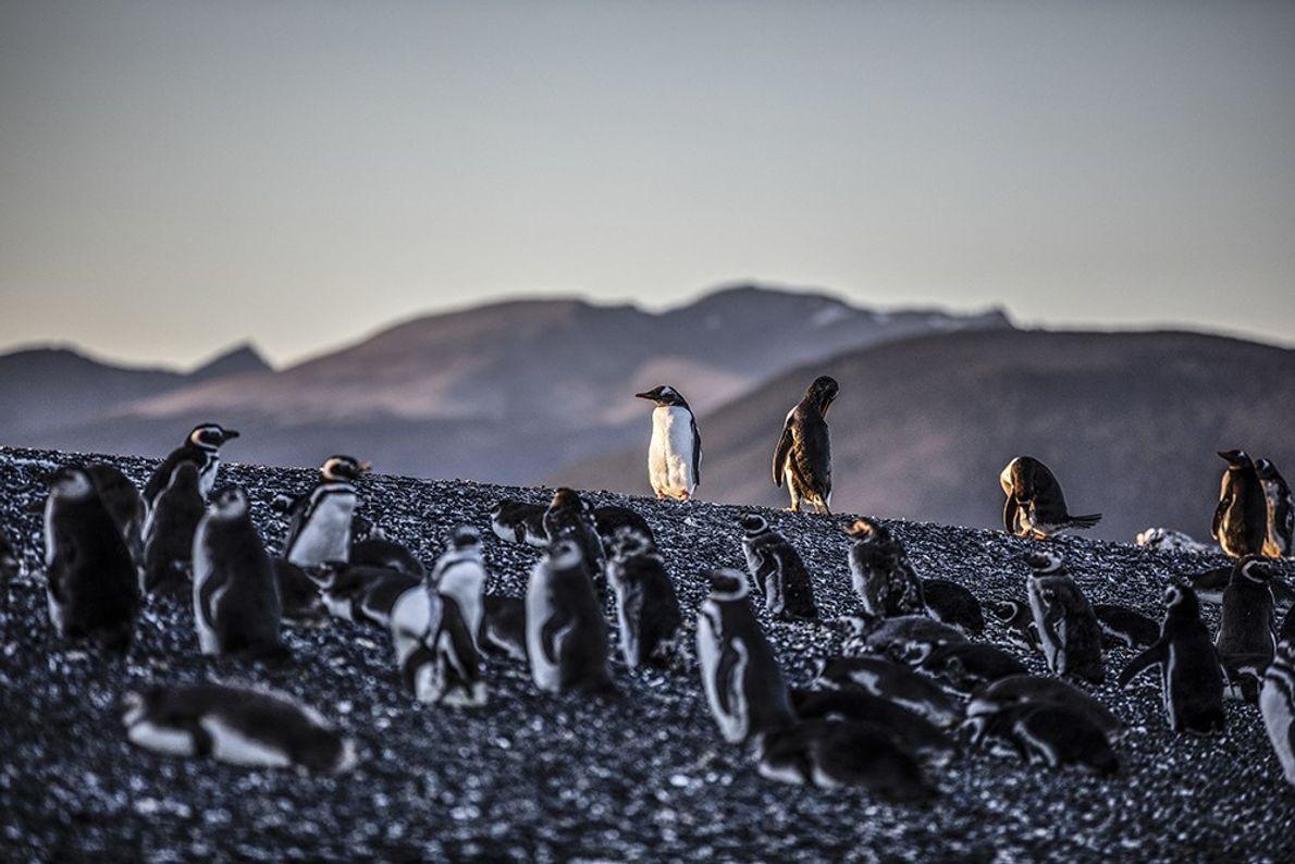 pinguinosrikky3