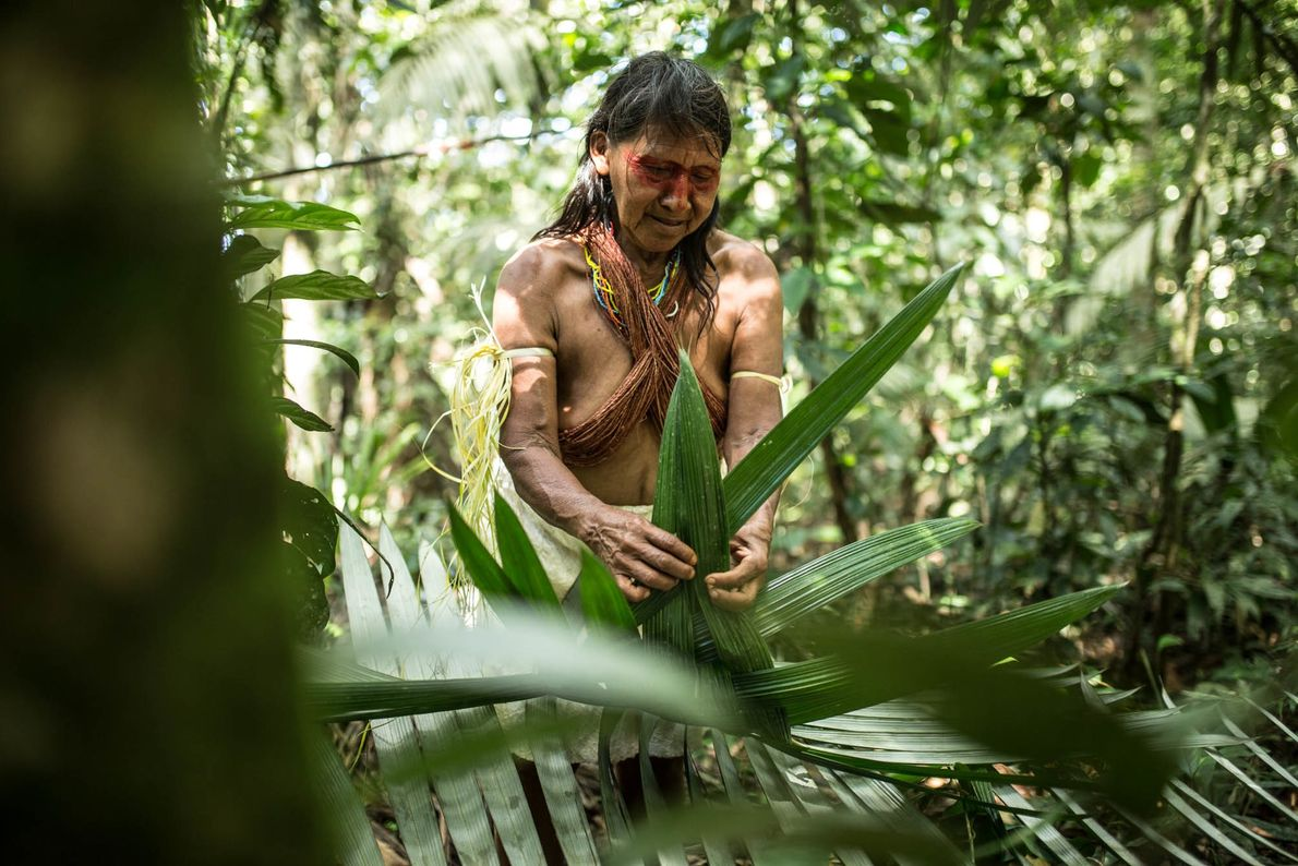 Mujer Waorani cosechando plantas en la selva, provincia de Pastaza, Amazoníaecuatoriana.
